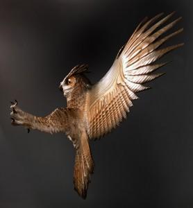 Owl-wood-carving-jason-tennant