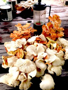 Oysters and Chicken August 14, 2016