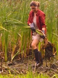 Terri Cattails Pond